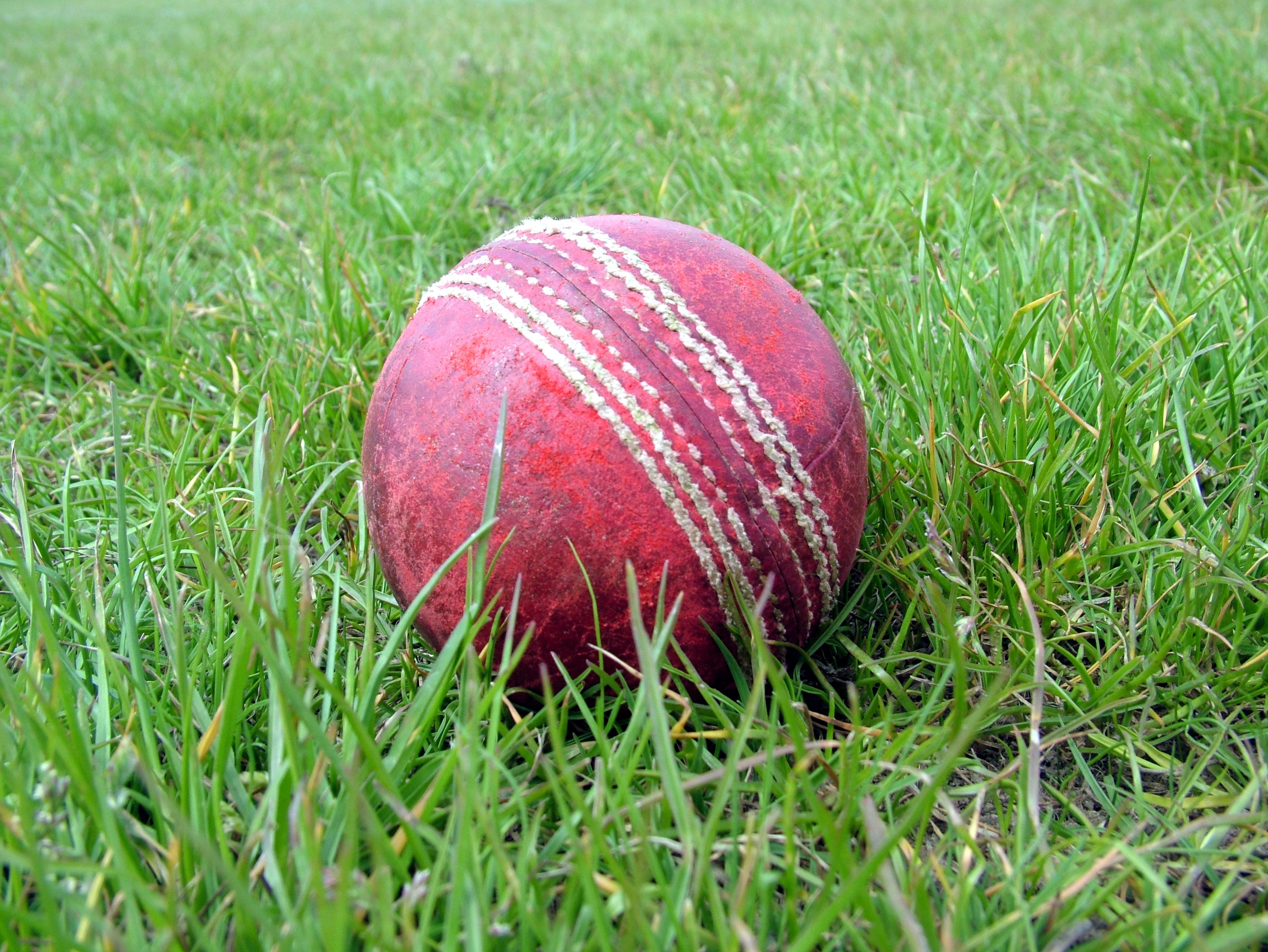 cricket-1164883