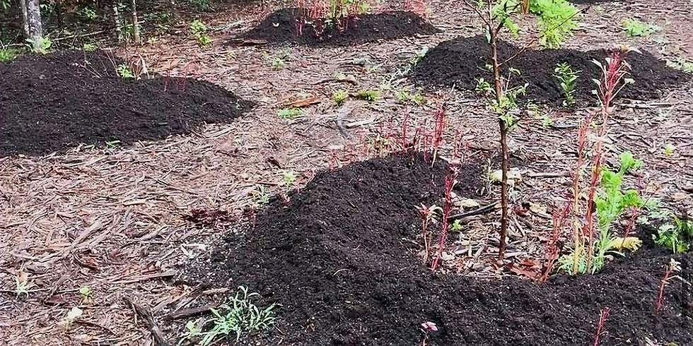 Permaculture Landscaping