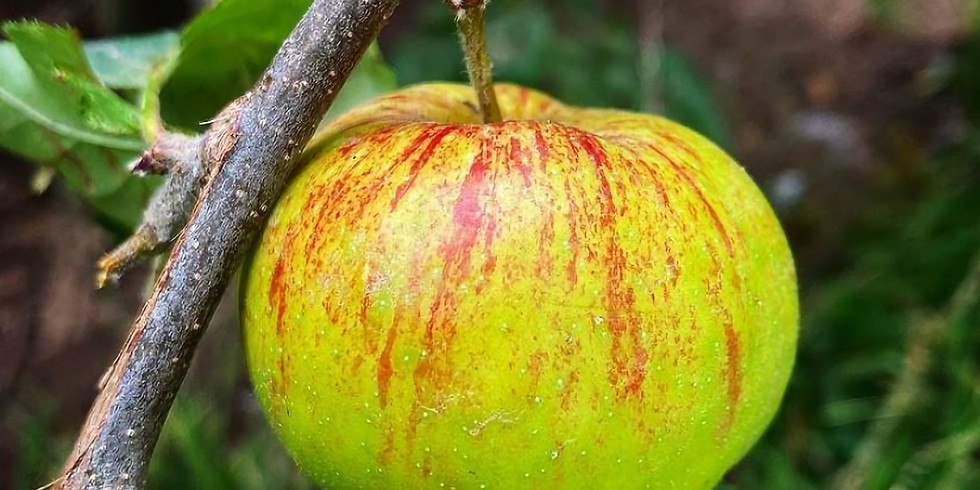 Growing Organic Apples with Sorella Oaks