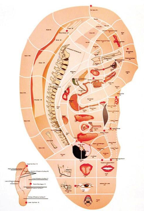 auriculoterapia.jpg