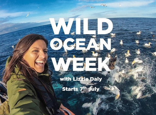 Wild Ocean Week. The UK's Wildest Adventure
