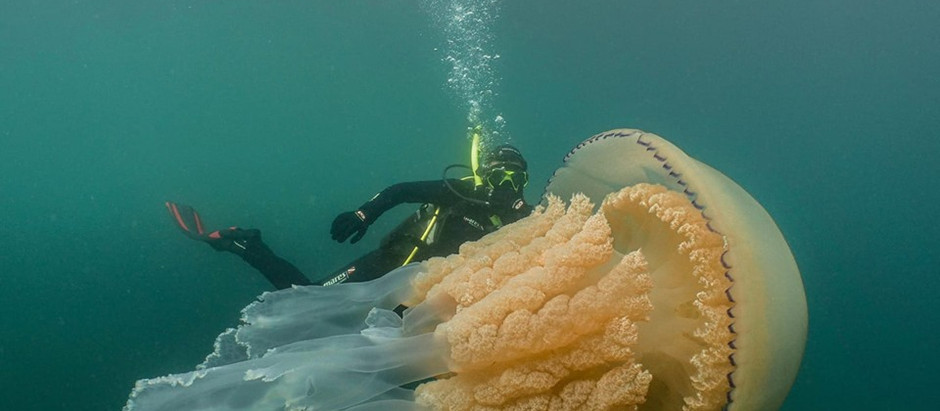 The Giant Jellyfish : Turning viral into Citizen Science!