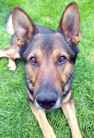 The Police Dog Who Changed The Law