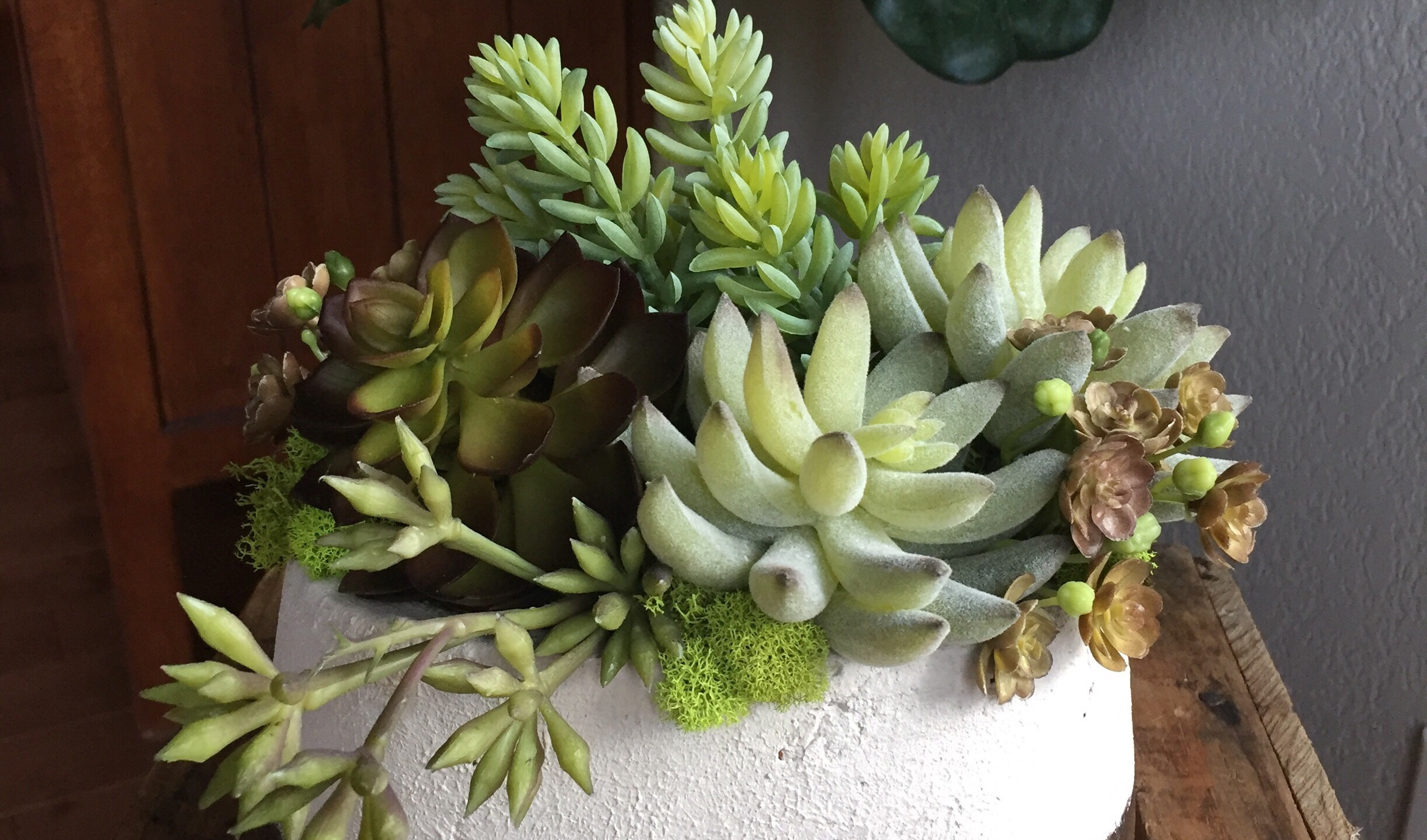 Sherry Bouma_Succulent Cottage_Seattle S