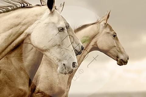 Sepia horses - MINT Decoupage Paper