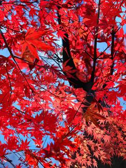 Autumn Leaves 2015