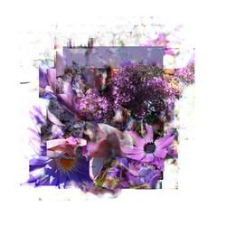 July Purple