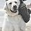 Thumbnail: Soggy Doggy SUPER SHAMMY