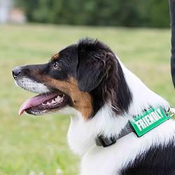 bark-notes-dog-collar-leash-attachments-friendly-8634