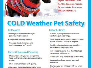 COLD WEATHER PET SAFETY