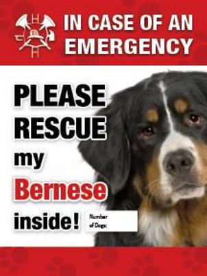 Bernese Pet Safety Decal