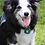 Thumbnail: Peace Tag Dog Tag Silencer