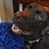 Thumbnail: Soggy Doggy Slobber Swabber