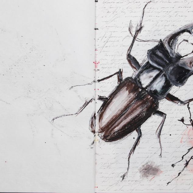 aus den skizzenbüchern, o.t., tusche und ölkreide auf papier, 2008