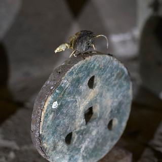 o.t., aus der serie 'bestandsaufnahme', 2021, holz, eisen, mumifizierte maus, 6,5 x 19 x 26,5 cm