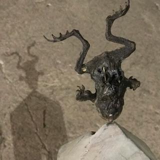aus der serie 'bestandsaufnahme', o.t., 2021, holz, eisen, mumifizierte kröte, 47,5 x 10,5 x 13 cm
