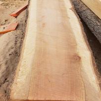 Eucalyptus slab.jpg