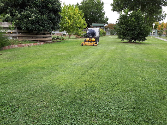 Lawn Mowing 5.jpg