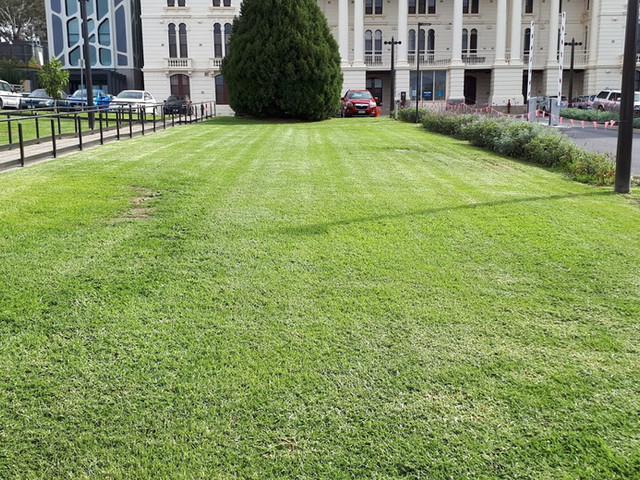 Lawn Mowing 8.jpg