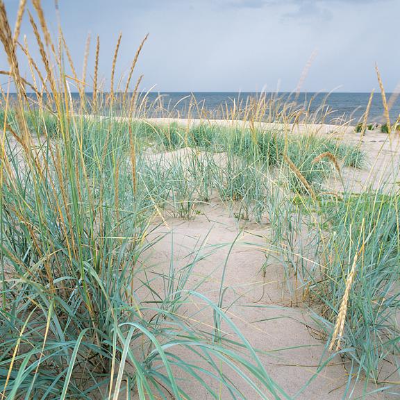 Le Dune.