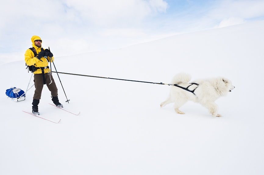 Skier & Samoyed dog.