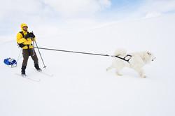 Skier & Samoyed dog.