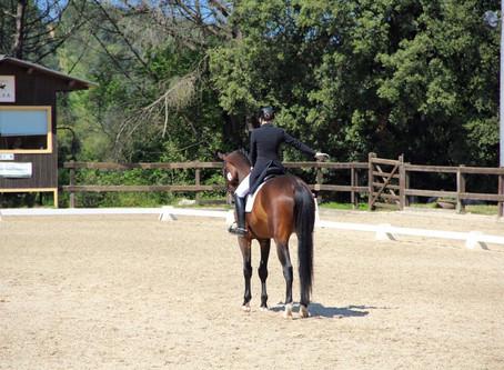 ¿Qué hacemos si el caballo muestra resistencia a la hora del aprendizaje?