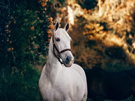 5 consejos para una buena relación con tu caballo