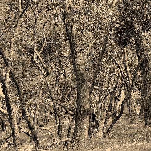 The-Forests-of-Maldon.jpg