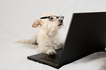 Terrier wearing glasses and working at l