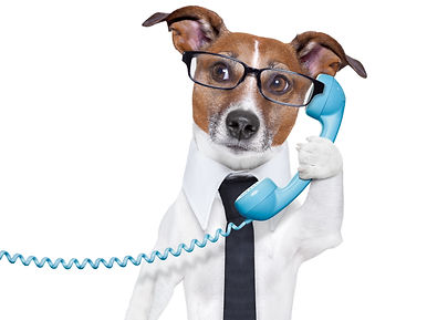 business dog with a tie and glasses list