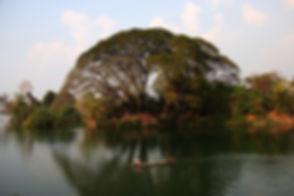 tree-681715_1280.jpg
