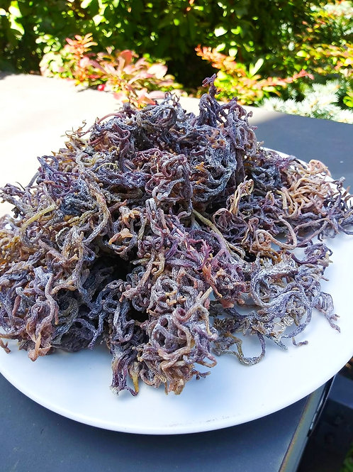 Jamaican Sea Moss (Irish Moss) 1 LB