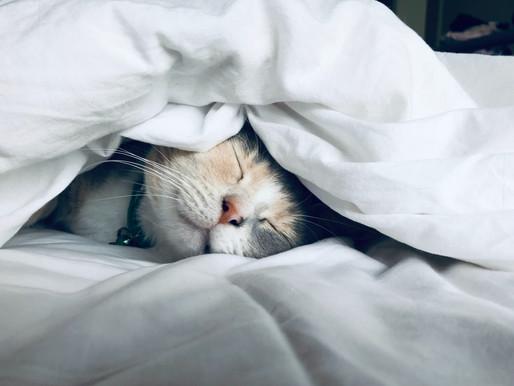 Pourquoi aborder le sujet du sommeil en entreprise ?
