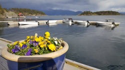 The boats and the floating dock