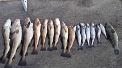 Mye fisk å få