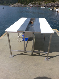 table with water for cleaning fish