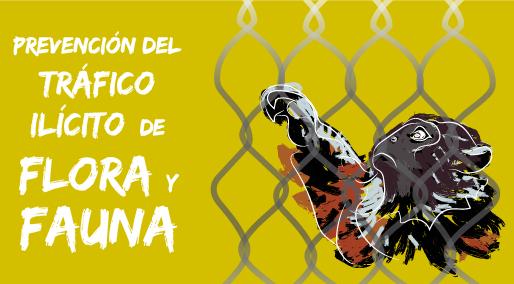 Cuidemos nuestra flora y fauna: No al tráfico ilícito de las especies colombianas
