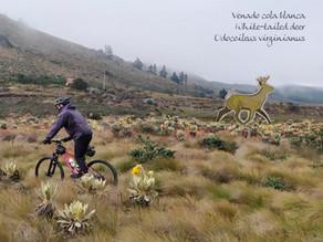 Ruta Chingaza, una ruta de bikepacking como proyecto de conservación