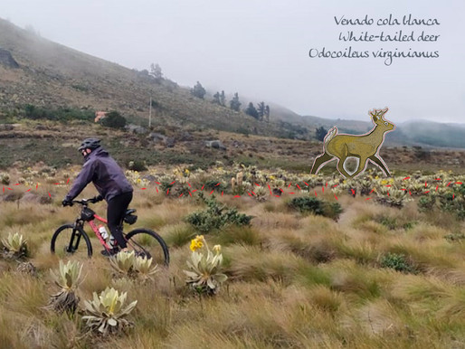 Ruta Chingaza, a bikepacking route within a conservation project
