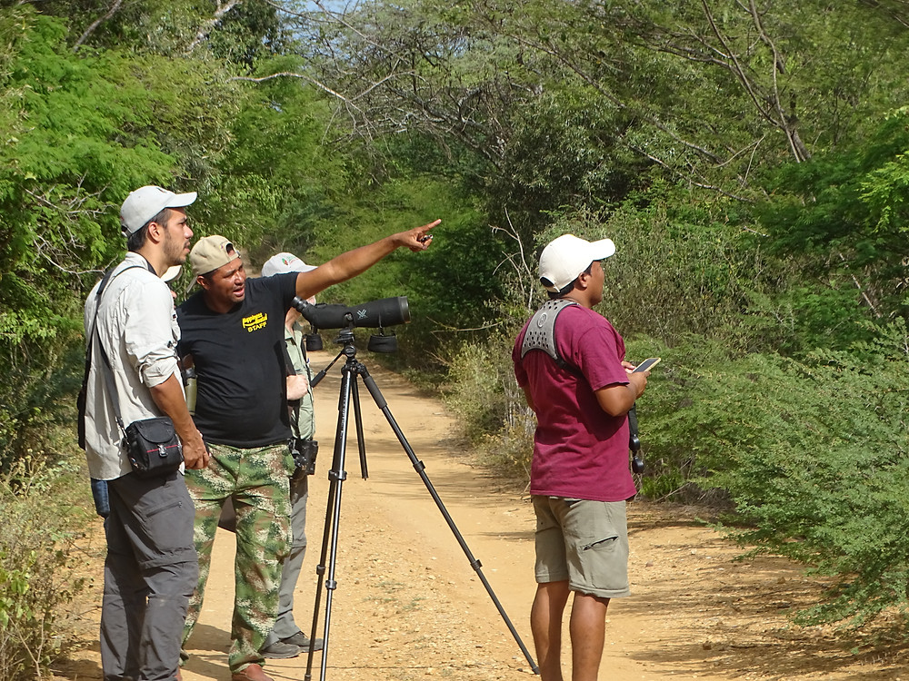 Birding in La Guajira