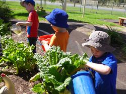 Watering our vegetable garden.