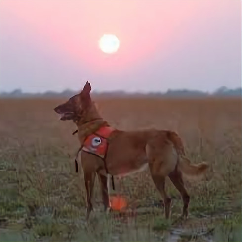 Canine Legal Update Seminar-Working Dogs for Conservation