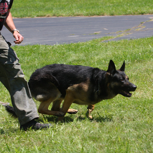 Middleton, WI: Patrol & Narcotics, 2-day Canine Legal Updates