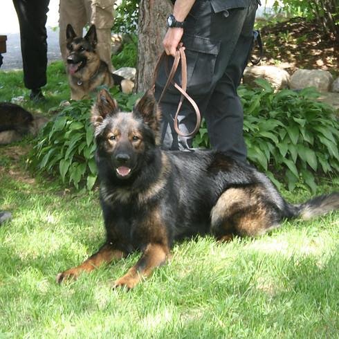 Delphi, Indiana 2-day Seminar: Canine Legal Updates & Opinions, Patrol & Narcotic (1)