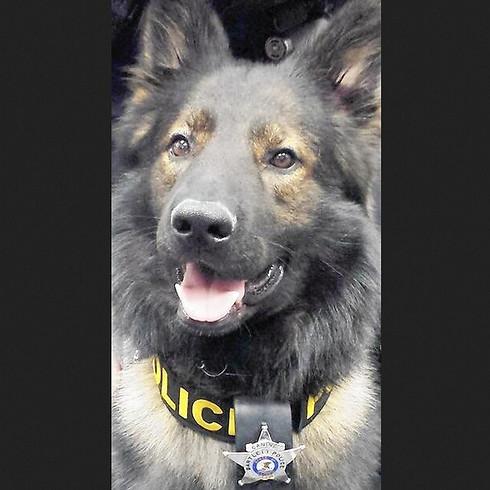 Pewaukee, WI: Dual Purpose (Patrol & Narcotics) Police Dog Seminar