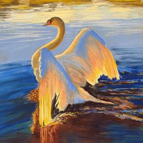 Swan Light
