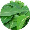 neem-leaves-500x500.jpg