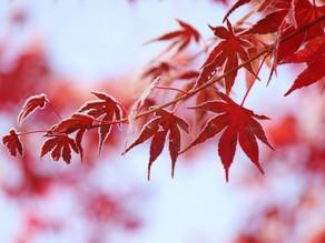 【季節つぶやき事典】第15回《立冬》