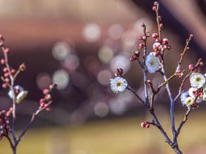 【季節つぶやき事典】第22回《雨水》